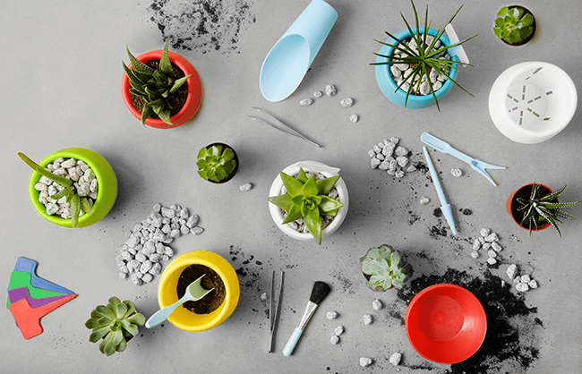 Lifestyle image shot overhead of materials for planting succulents
