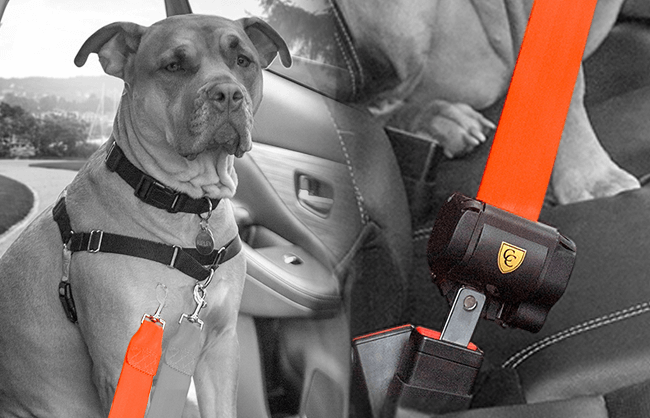 Lifestyle image of dog in care using a dog safety belt